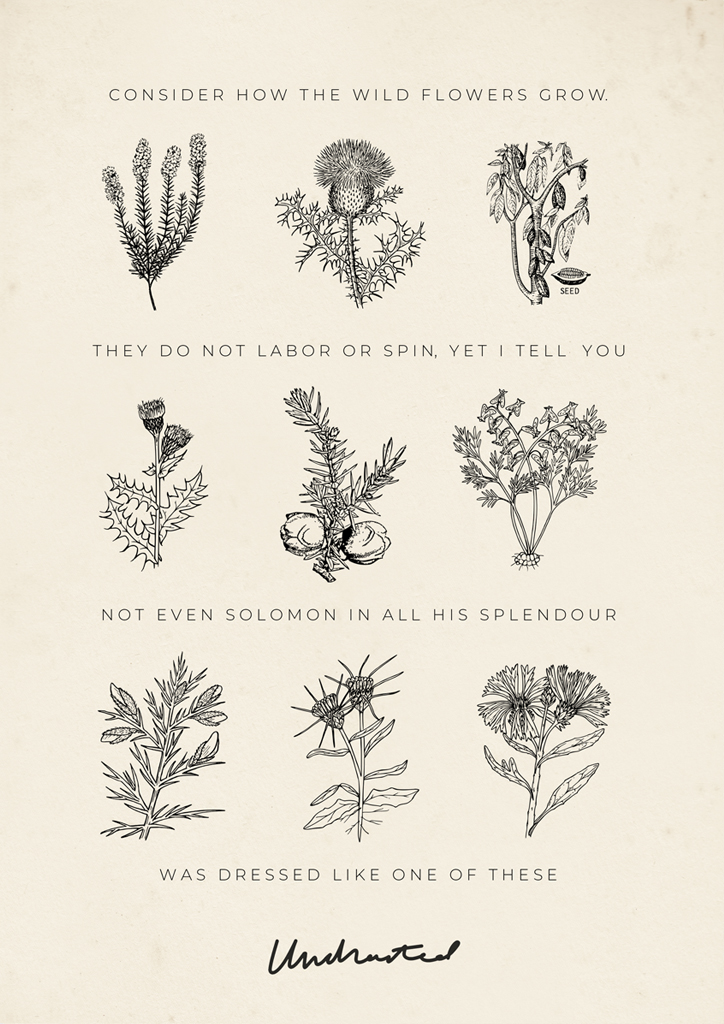 consider-the-wild-flowers